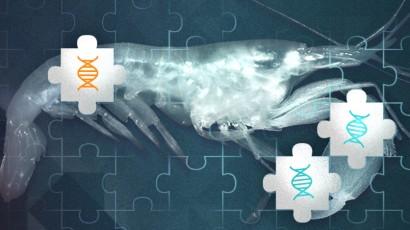 Bioprospecção